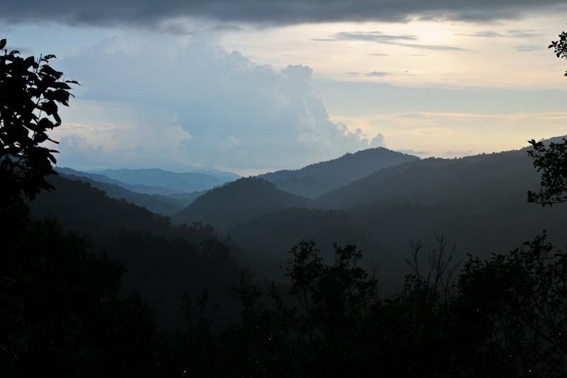 The Gibbon Experience, Laos-3034