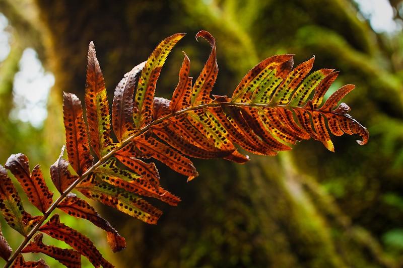 Redwoods-19