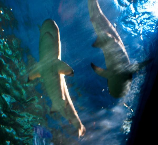 Vancouver Aquarium-7792