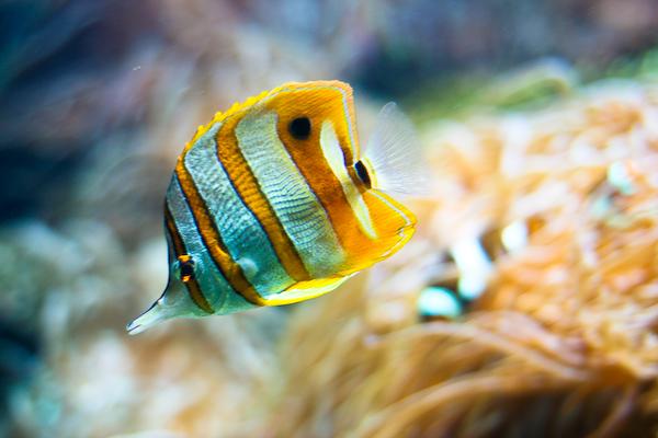 Vancouver Aquarium-7802