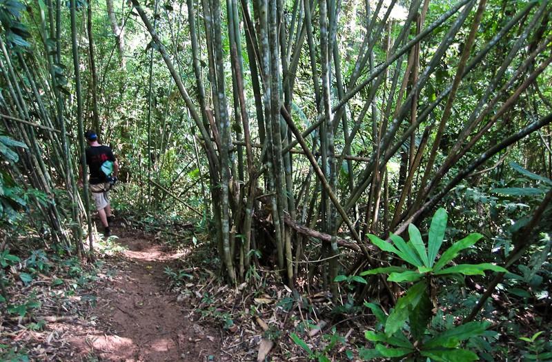The Gibbon Experience, Laos-2-2