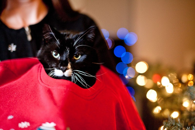dino tree and zappa in x-mas sweater-2438