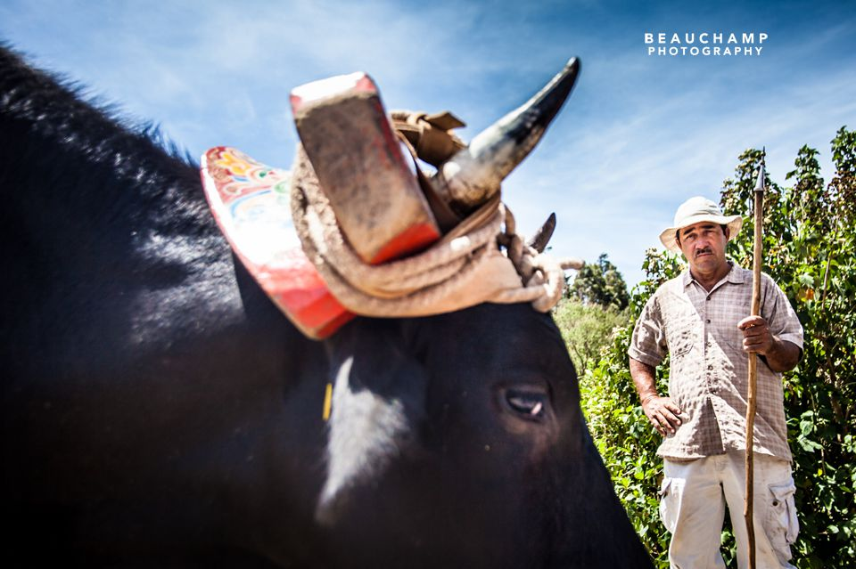 "A ""Tico"" poses with his ox. While this photo only features one of his two hard working friends, the ox were amusingly named ""Salt"" and ""Pepper""."
